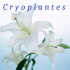 Cryoplantes logo